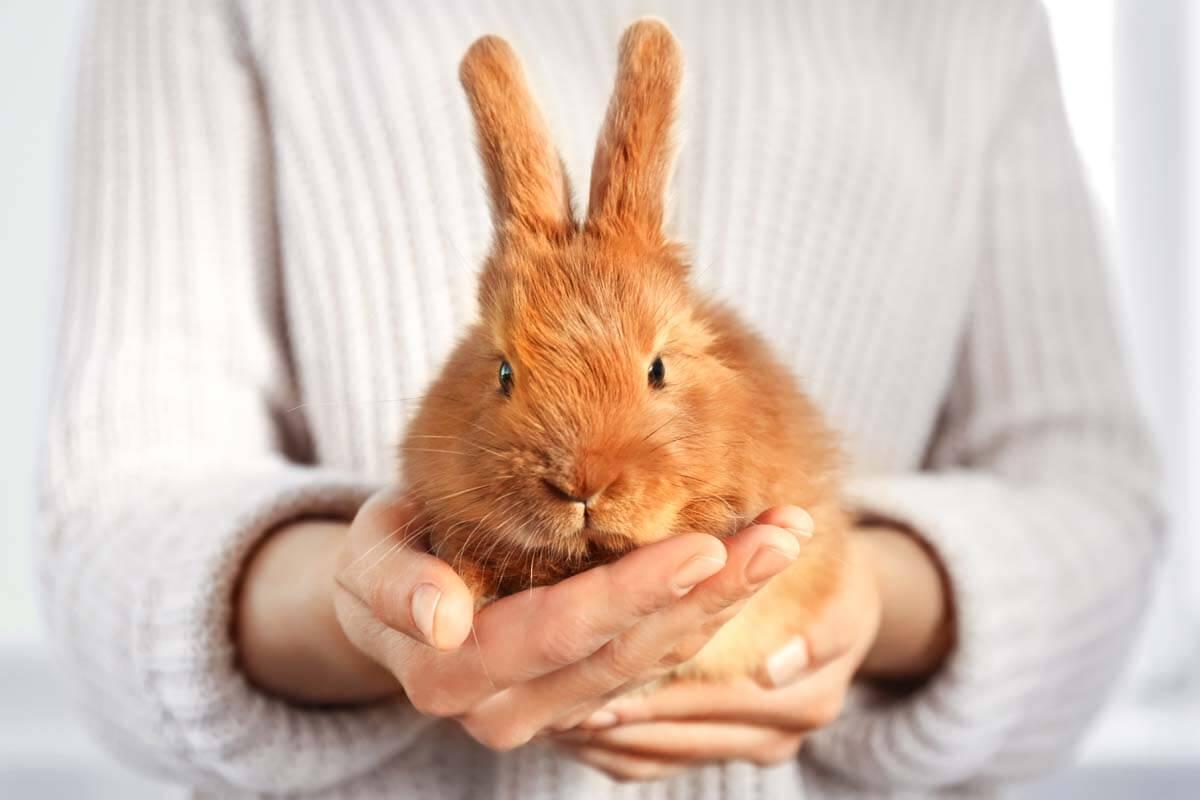 Kaninchen hilft bei Therapie