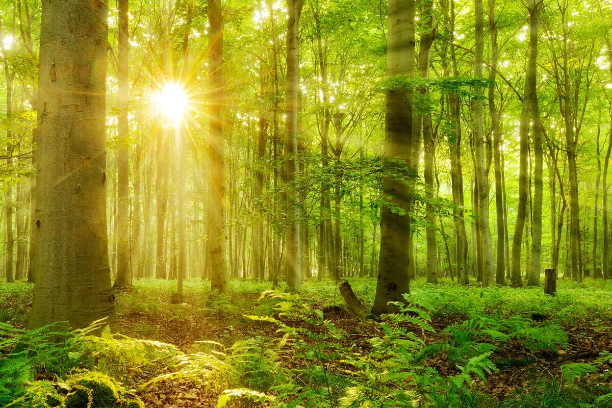 Waldbaden als Therapie