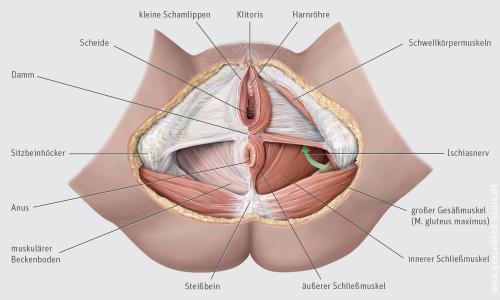 Mann anatomie beckenboden Beckenboden bei